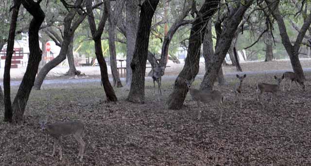 Tag 35 103 Wild auf dem Zeltplatz bei Fort Clarke.