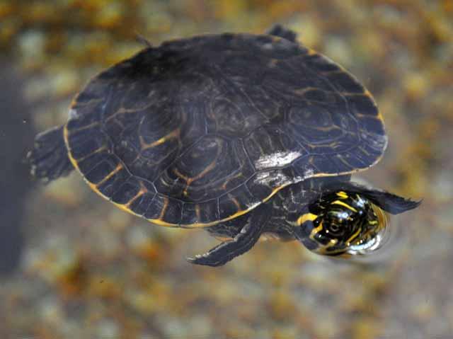 Tag 62 131 bis 134 Das Estuarium ist sehr interessant: Dort sind viele Fische, Schildkröten und andere Tiere zu sehen.