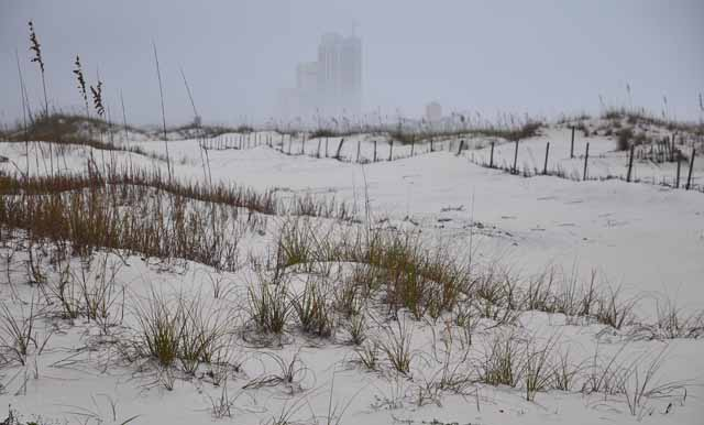 Tag 64 135 Orange Beach.
