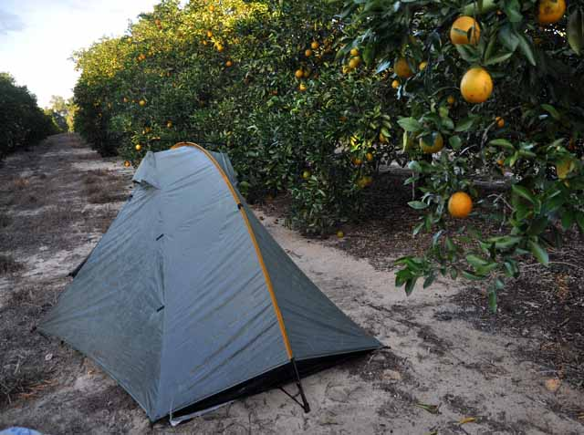 Tag 81 181 In Mount Dora habe ich in einer Orangenplantage geschlafen.