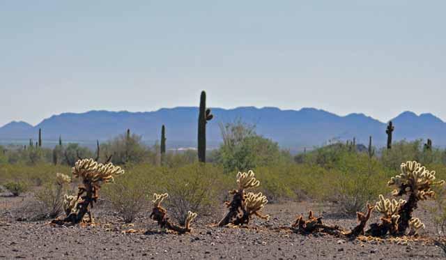 Tag 8 33 bis 36 Impressionen der Wüste.