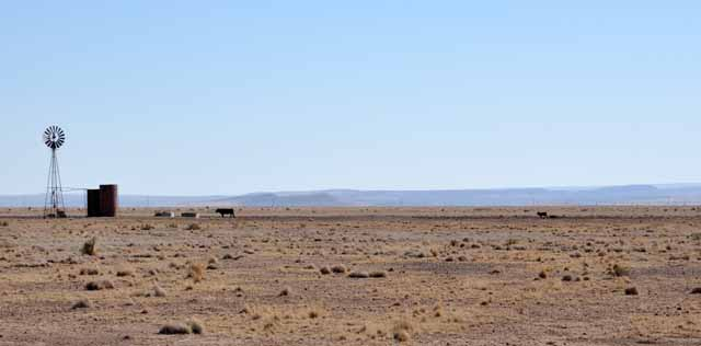Tag 29 96 Dürre in Texas. Eine Kuh geht zur Tränke, ihr Nachwuchs zockelt entkräftet hinterher.